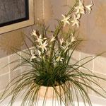 Комнатные цветы в ванной комнате