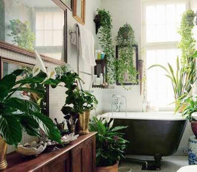 Цветы в ванной комнате фото