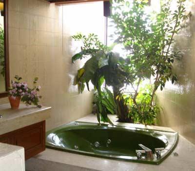цветы у окна в ванной