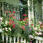 Как подобрать цветы для балкона