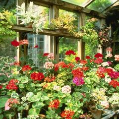 выбрать цветы для балкона