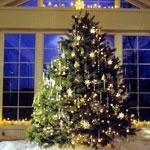 Какую елку купить: искусственную или живую