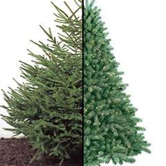 искуссственная и живая новогодняя елка