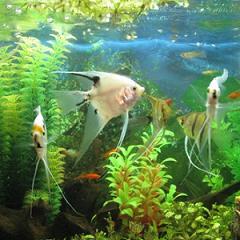 аквариумные рыбки новичкам