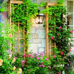 Как украсить свой сад вьющимися растениями