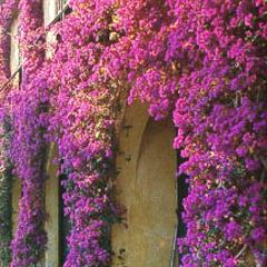 украшение вьющимися растениями