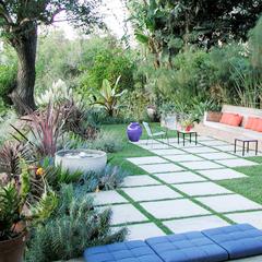 экзотические растения в саду
