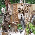 Рутарий в саду - необычное украшение участка