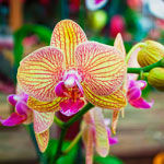 Болезни и вредители орхидей: как спасти растение от гибели