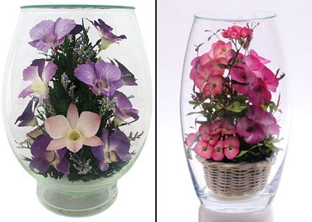 живые цветы в стекле