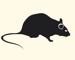 гороскоп на 2013 год Крыса