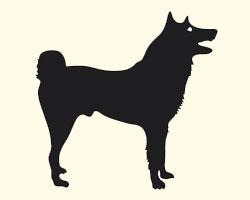 гороскоп на 2013 год Собака