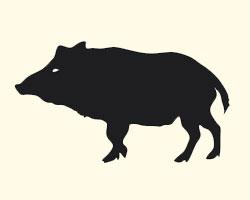 гороскоп на 2013 год Свинья (Кабан)