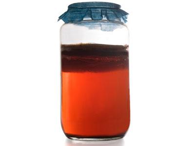 свойства чайного гриба