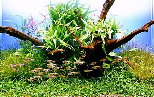 главное в разработке дизайна аквариума- это его обитатели