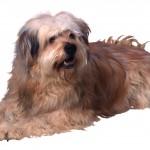 породы собак для дома