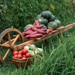 Как правильно убирать урожай